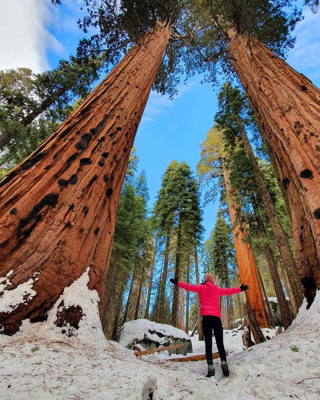 Cruise-America-Best-Time-to-Visit-Sequoia-National-Park-RV-Camping-insta-pelomundo-(1).jpg