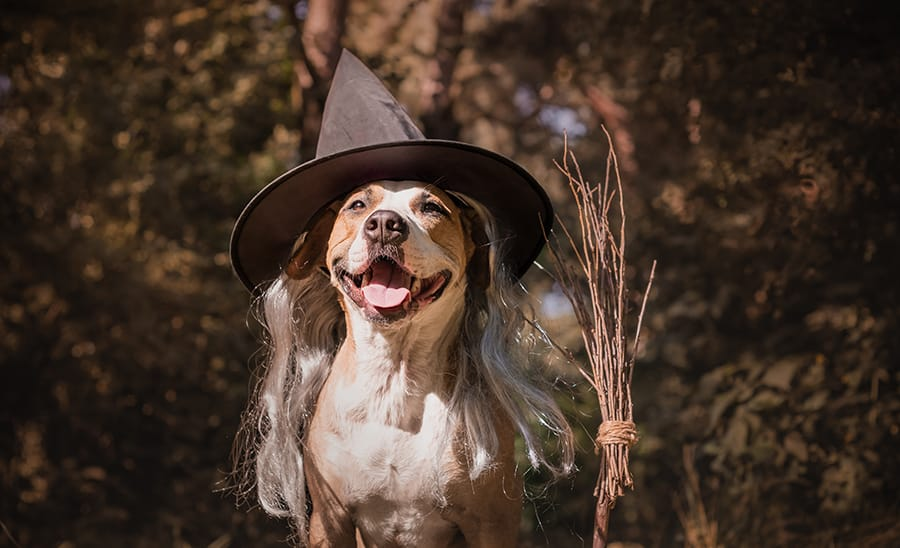 Celebrate_Halloween_Outdoors_dog_witch_hat.jpg