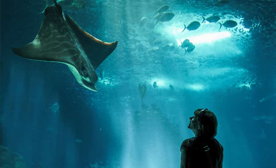 The 6 Coolest Zoos and Aquariums in the U.S.