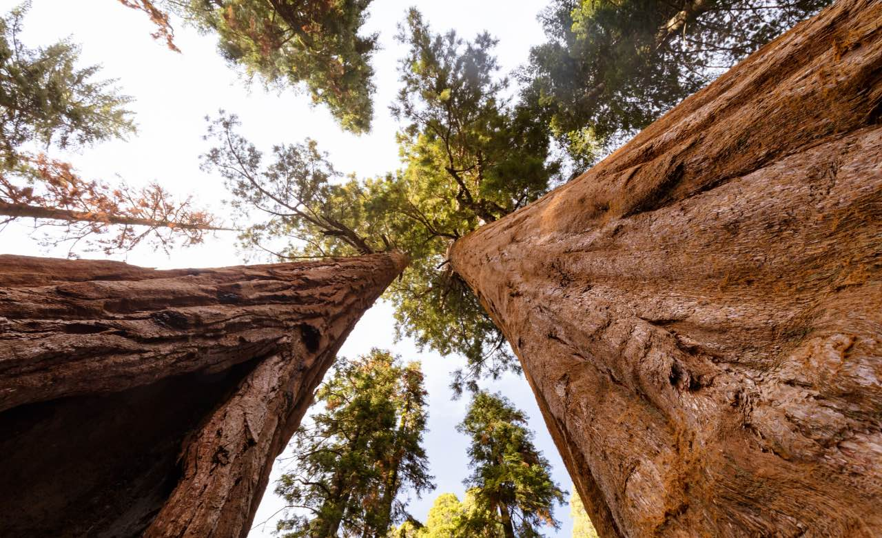 Cruise-America-Tips-on-Visiting-Sequoia-National-Park.jpg