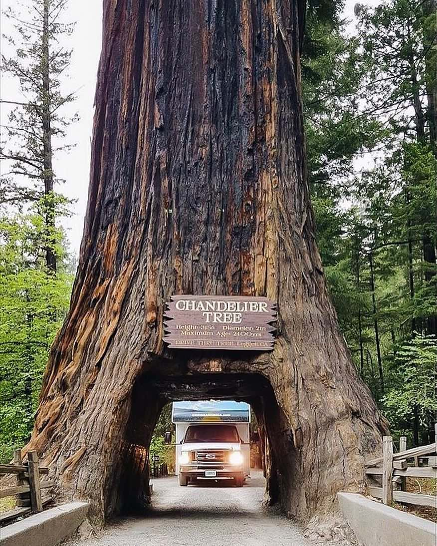 Cruise-America-Tips-on-Visiting-Redwood-National-Park-hausvonfloof.jpg